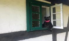 W otwartym oknie starej chałupy siedzi pluszowy misiu. Na pyszczku ma różową maseczkę ochronną.